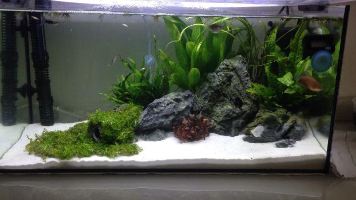 Aquarium: Re-scaping my 15 gallon/60 Ltank